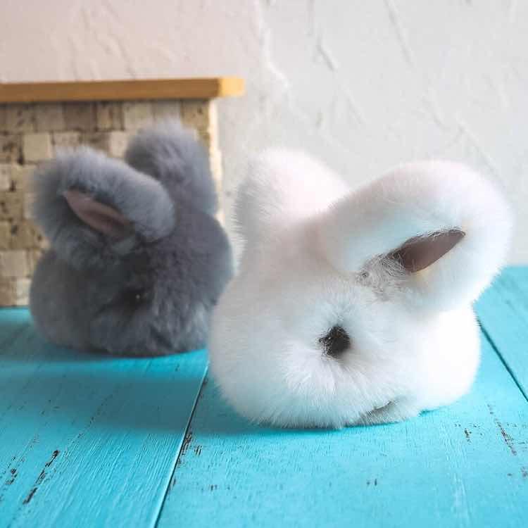 兔子抱紧胡萝卜