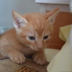 猫爪玩家小喵喵